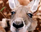 ¿Te gustaría estudiar con una beca en Australia?