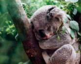 Becas Endeavour en Australia: ¿estudias o trabajas?