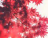 Becas Monbukagakusho para estudiar en Japón en 2019