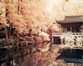 Japonés de supervivencia: frases imprescindibles para tu viaje a Japón