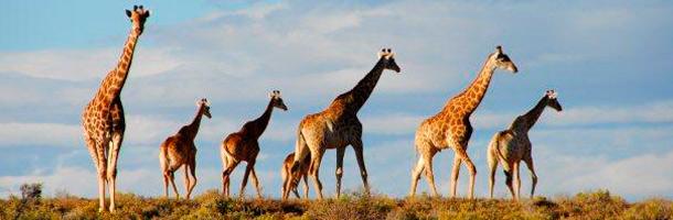 Apúntate a un curso para aprender inglés en Sudáfrica ya