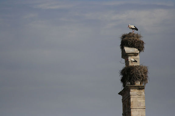 cigüeña en torre