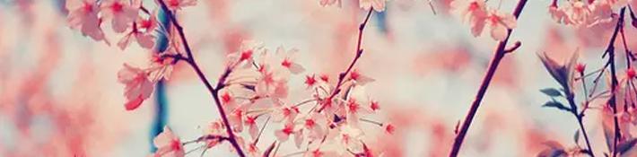 Entre los términos más raros del idioma japonés encontrarás significados de lo más variopinto