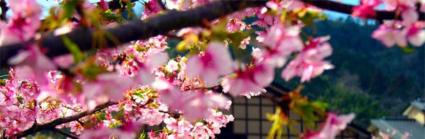 Viajar, trabajar, descubrir nuevas culturas... Son muchas las razones por las que aprender japonés