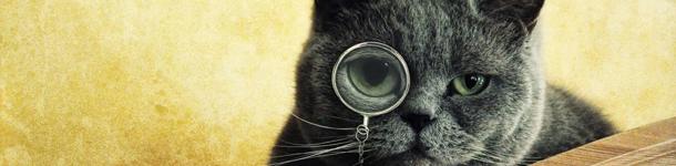 Incluso los dichos del inglés mencionan a gatos