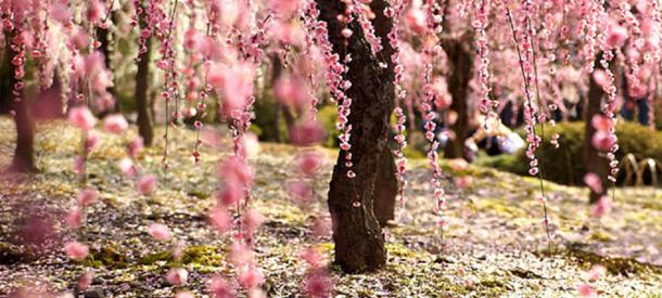 Japón convoca nuevas becas Formación Especializada-Monbukagakushō