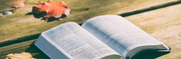 Aprende una serie de palabras curiosas del inglés que seguro no conocías