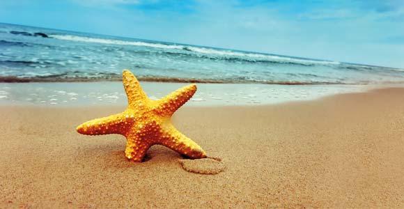 ¿No te gustaría aprender inglés al lado del mar?